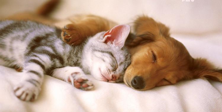 Animali per combattere la depressione