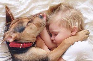 coccole con il cane